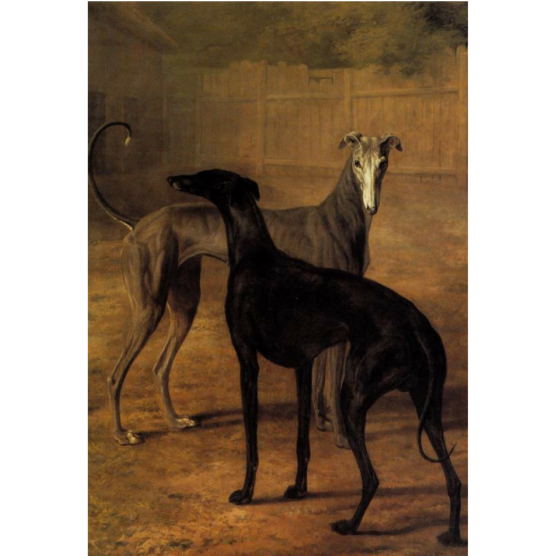 Pocztówka Sighthounds in Art No. 5