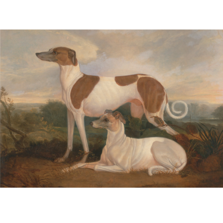 Pocztówka Sighthounds in Art No. 10