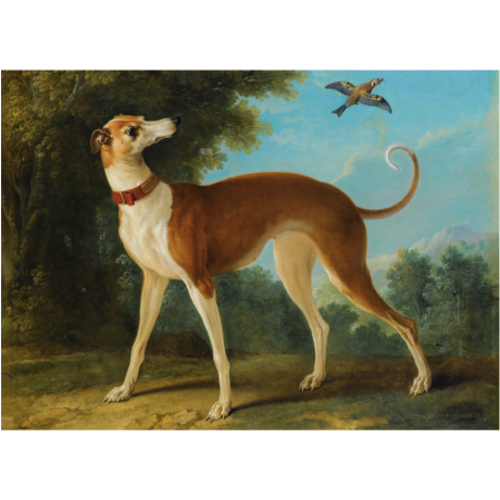 Pocztówka Sighthounds in Art No. 7